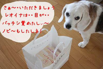 5_20080626211232.jpg