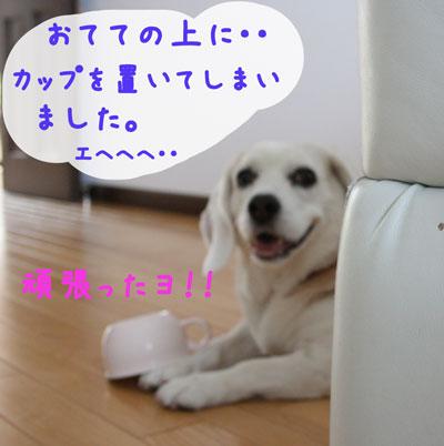 5_20080627233342.jpg