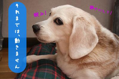5_20080710152859.jpg