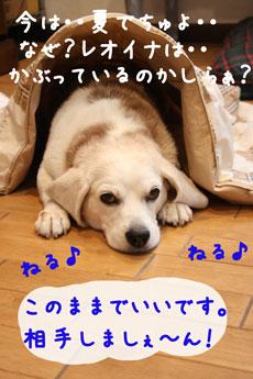 5_20080715222511.jpg