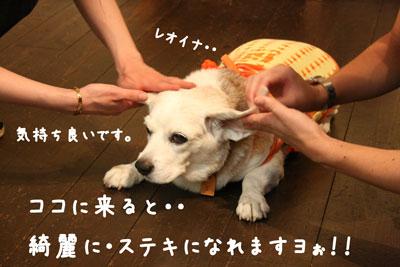 5_20080717185107.jpg