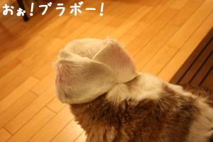 耳折り紙??