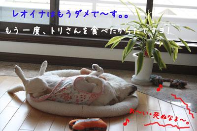 66_20080526170735.jpg