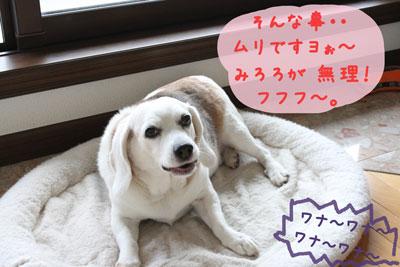 6_20080627143539.jpg