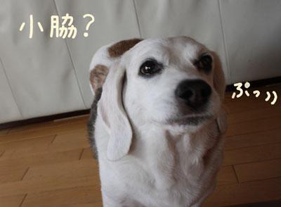 6_20080707180948.jpg