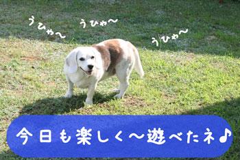 6_20080708112028.jpg