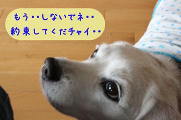 6_20080714095643.jpg