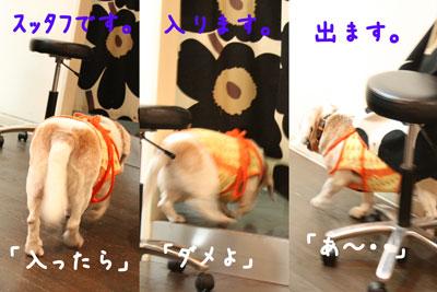 6_20080718151327.jpg