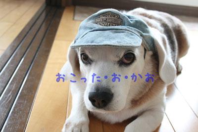 6_20080720134754.jpg