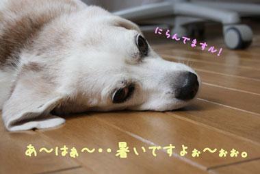 6_20080730140324.jpg