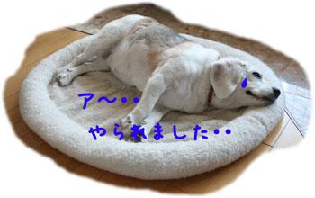 6_20080804124108.jpg