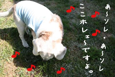7_20080516150011.jpg