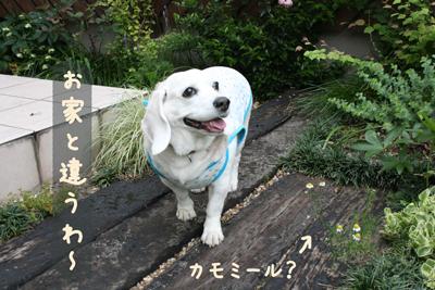 7_20080603020711.jpg