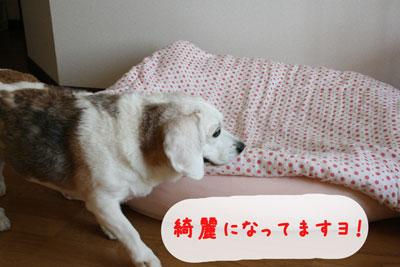 7_20080704142737.jpg