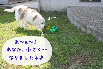 7_20080706154355.jpg