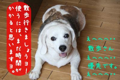 7_20080713150547.jpg