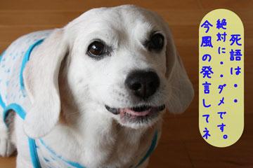 7_20080714095655.jpg