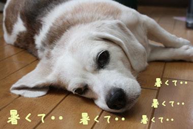7_20080730140330.jpg