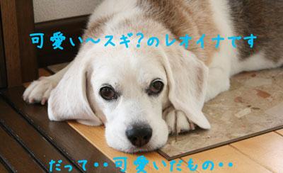7_20080804124120.jpg