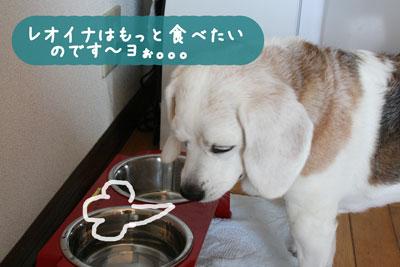 8_20080616111020.jpg