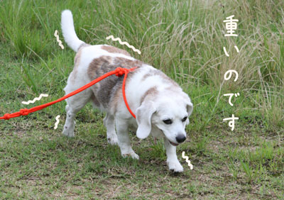 8_20080711225153.jpg