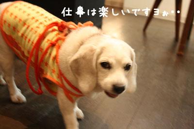 8_20080718151349.jpg