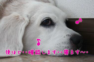 8_20080724002843.jpg
