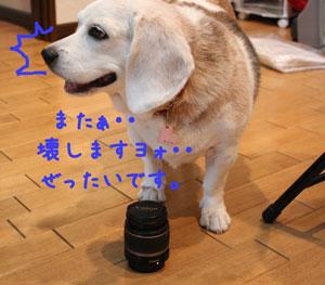 8_20080729171903.jpg