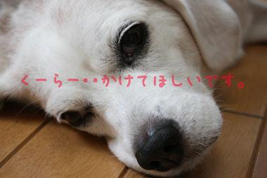 8_20080730140336.jpg