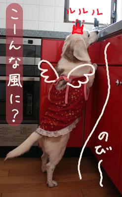 8_20080803182859.jpg