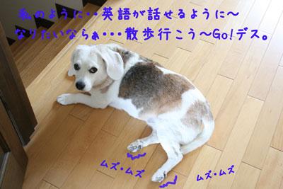 9_20080613154609.jpg