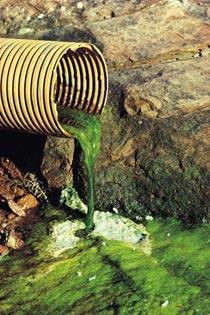 緑化するチュウゴクその4