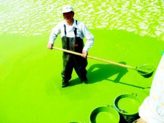 緑化するチュウゴクその3