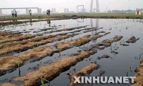 原油で汚染されたチュウゴクの素敵な田んぼ