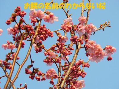 P1150315s.jpg