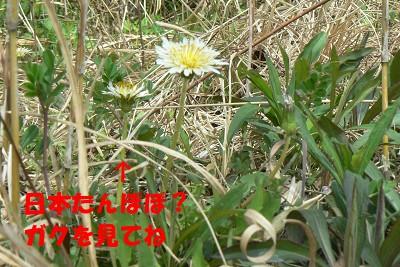 P1150775s.jpg