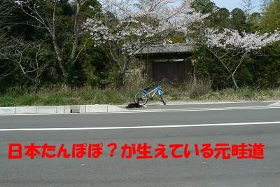 P1150785s.jpg