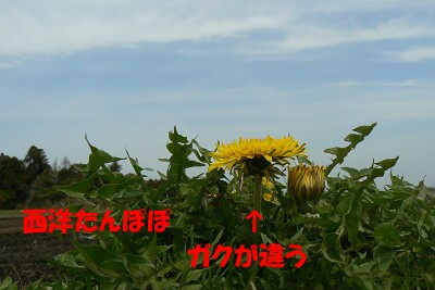 P1150808s.jpg