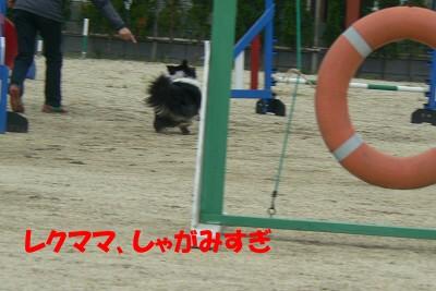 P1160841s.jpg