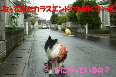 P1170156s.jpg