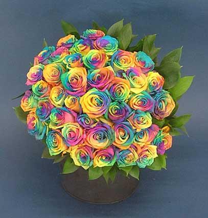 バラ<レインボー>の花束