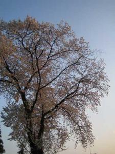 20080403-1.jpg