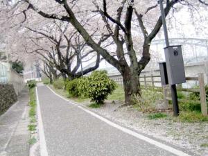 20080407-8.jpg
