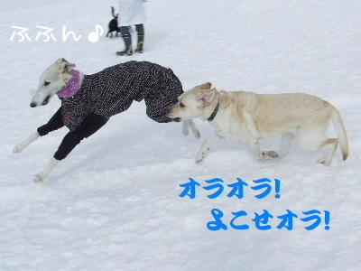 2006_0126n.jpg