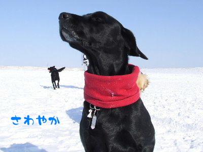 2006_0203k.jpg