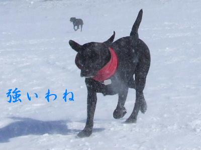 2006_0209a.jpg