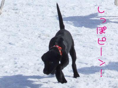 2006_0219f.jpg