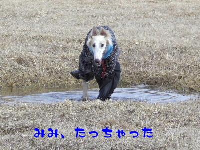 2006_0414a.jpg