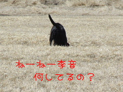2006_0414c.jpg