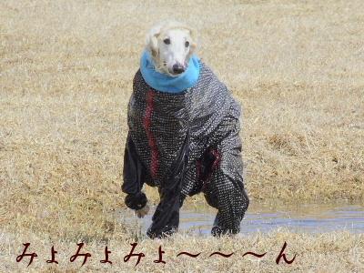 2006_0414e.jpg
